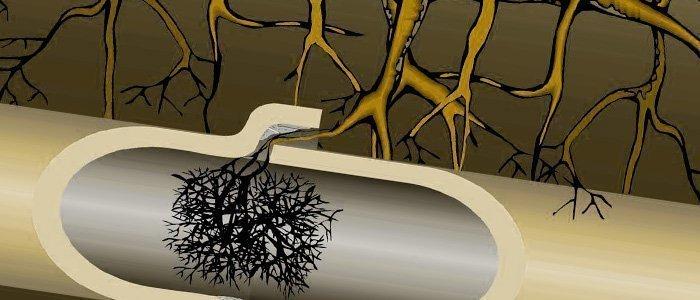 Las raíces en el alcantarillado
