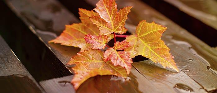 Consejos para evitar atascos en otoño - Castillo Desatascos
